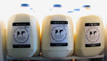 Milk Bottles from Thyme in the Country