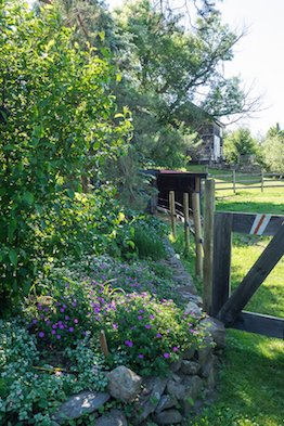flower garden near a wooden fence in summer over looking a lawn