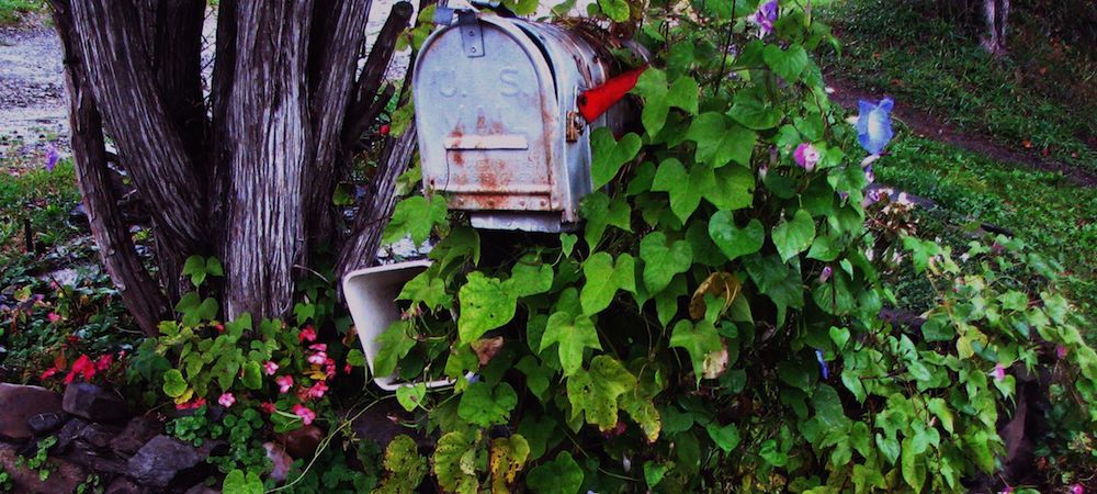 old mailbox near a tree covered with morning glory vines and flowers