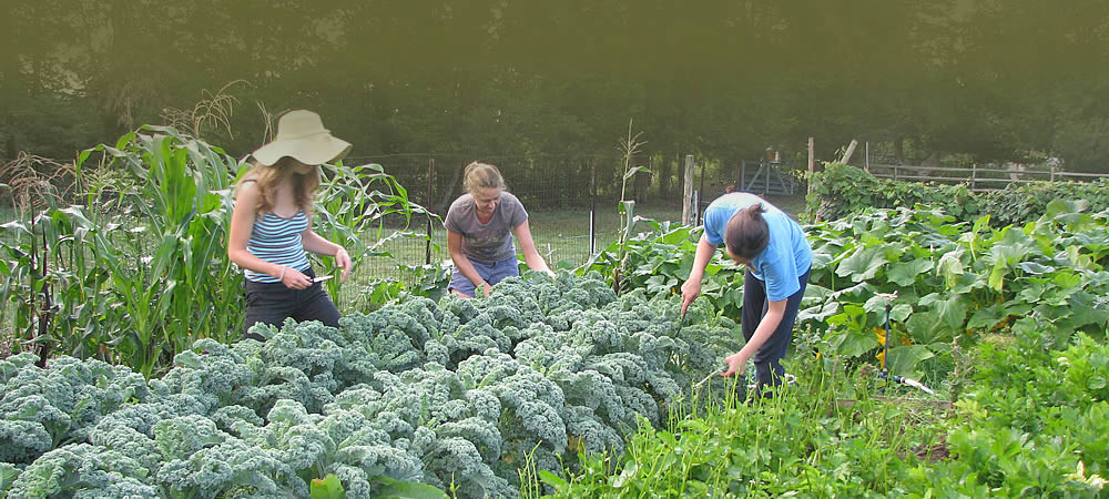 Three women in a lush garden pruning and picking vegetables.