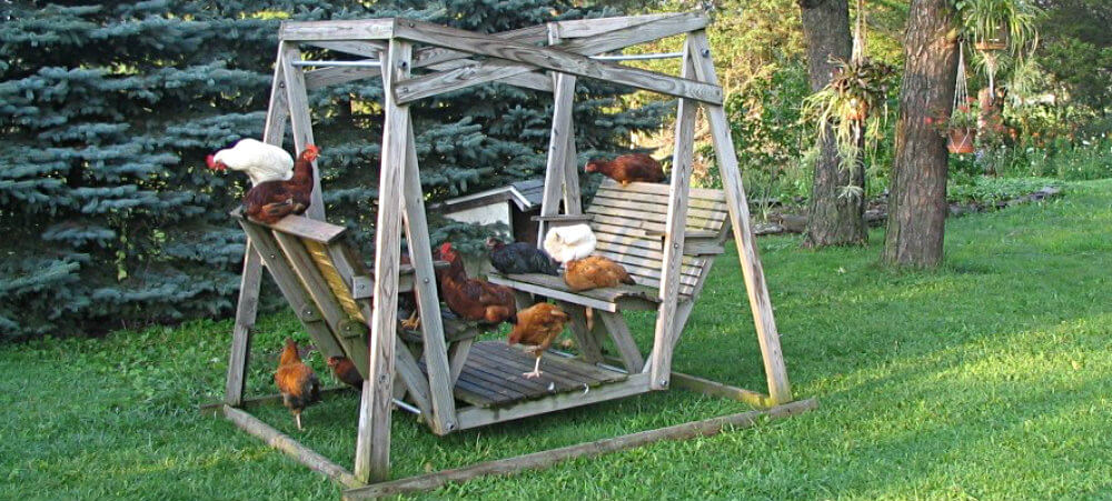 a dozen chickens perched on a double swing in the back yard