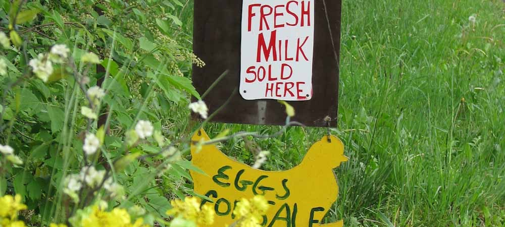 "Expansive grassy area with wildflowers and a sign that says ""milk sold here, eggs for sale."""