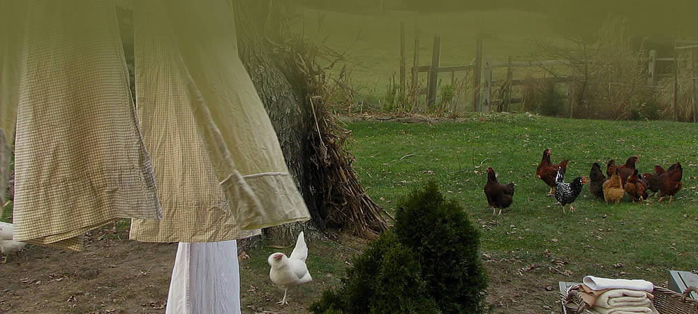 A group of chickens in a grassy area with sheets pinned to a clothes line off to the side,
