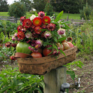 straw basket filled with tomatoes and wildflowers on top, sitting on a post at the edge of a garden plot