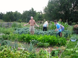 group of people in a very productive vegetable garden weeding and harvesting vegetables