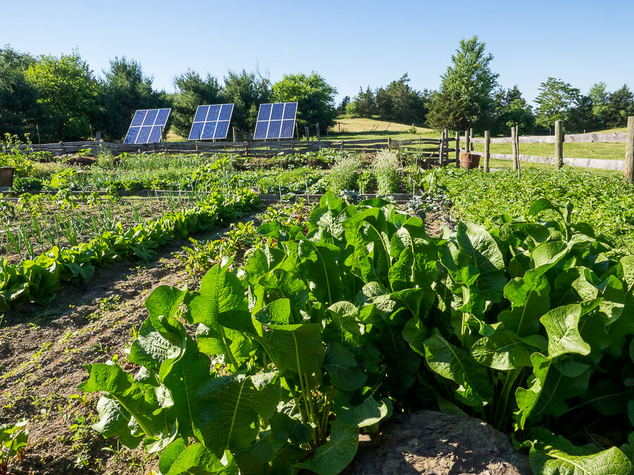 photo of vegetable garden with 3 solar panels behind it.