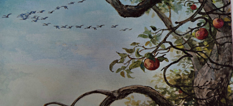 painting of birds flying south, tree branch with lone red apple in foreground, grey sky